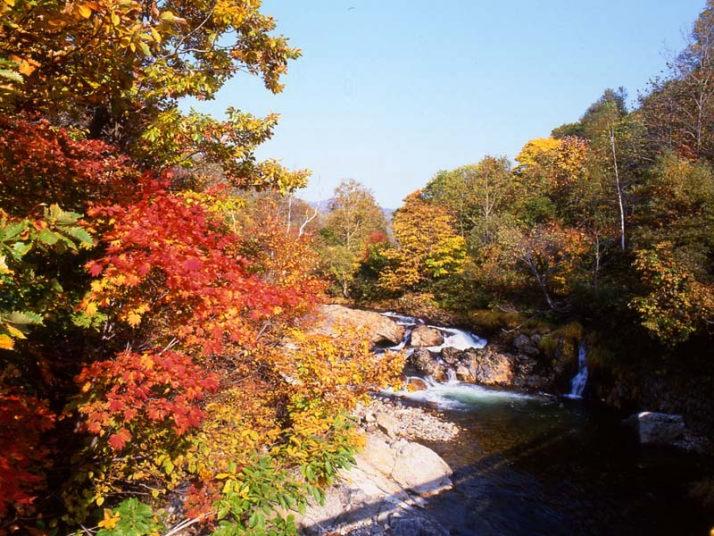 秋(Autumn) 写真館 赤井川村